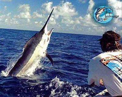 Reel intense sport fishing in honolulu hawaii us sport for Honolulu fishing charters