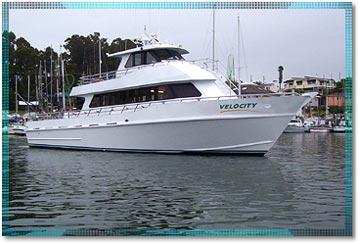 Stagnaro sport fishing charters and whale watching for Myrtle beach party boat fishing